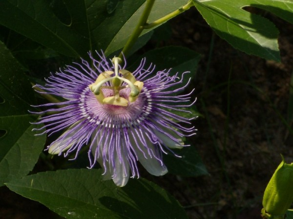 Seems to be part of the purple aster family of flowers